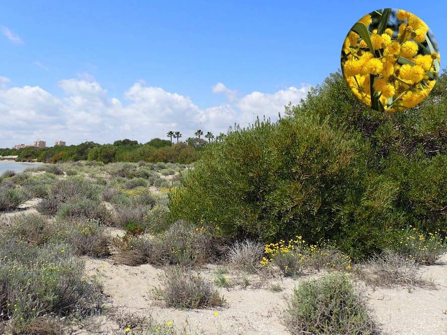 Invasoras dunas La Manga Estacio