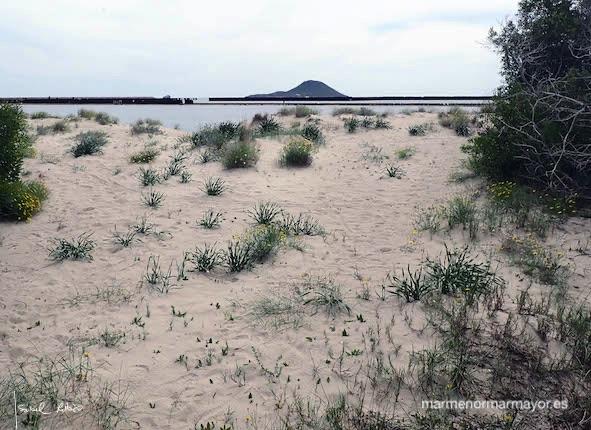 Dunas caleta Estacio La Manga flora lirio