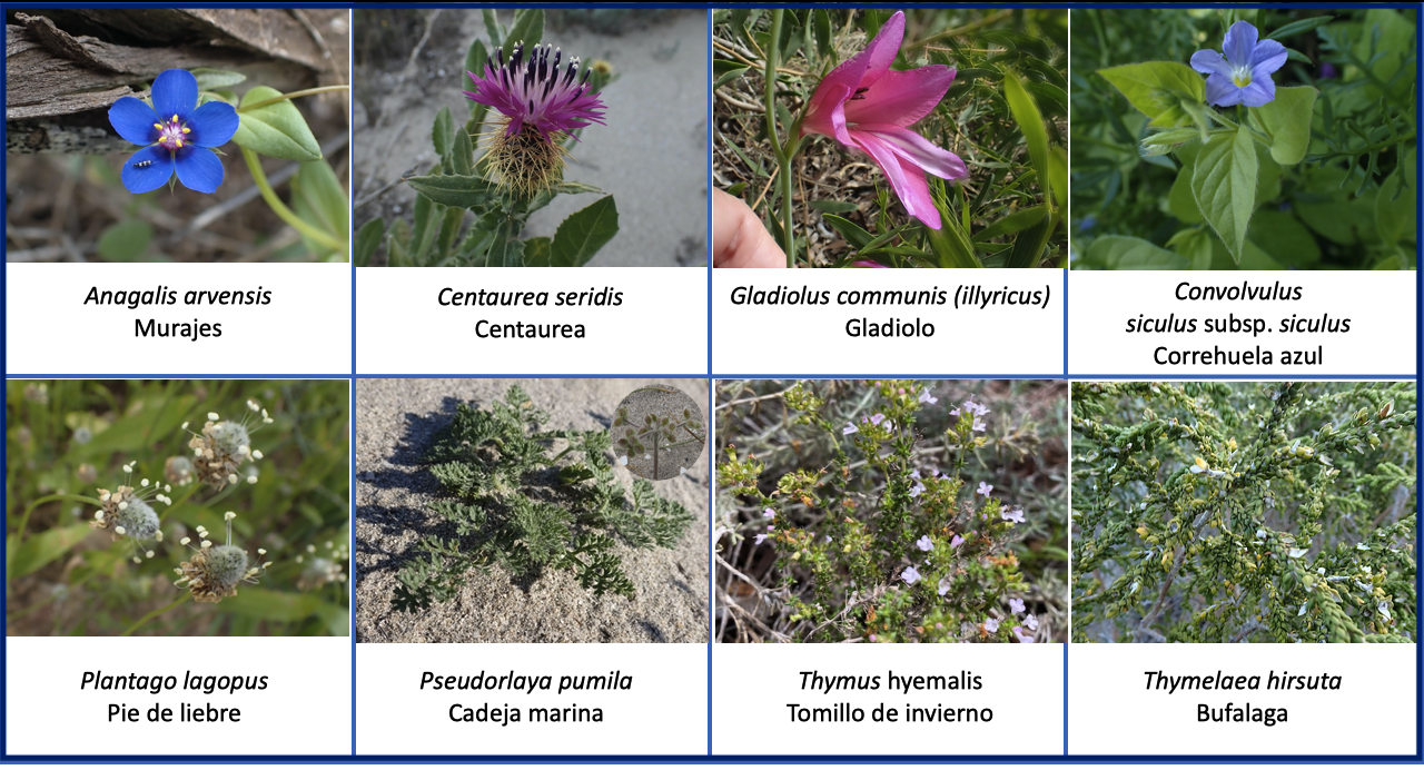 Flora Estacio La Manga vegetacion