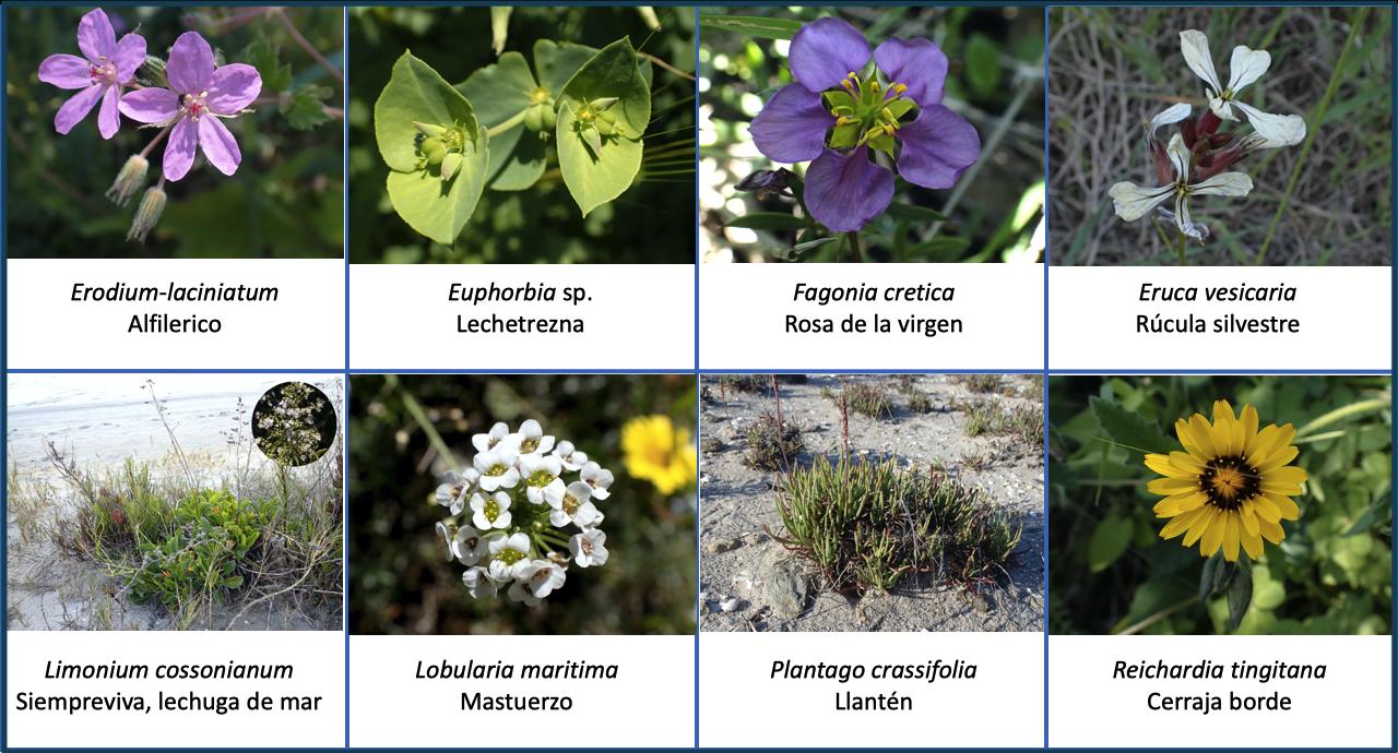 Flora Estacio La Manga vegetación